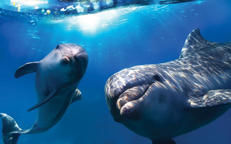dolphin_underwater_1920x1200